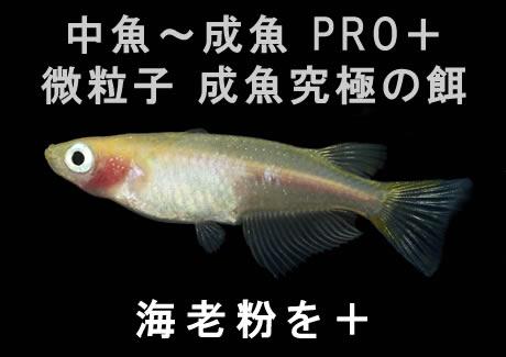 微粒子 成魚究極の餌【200g】